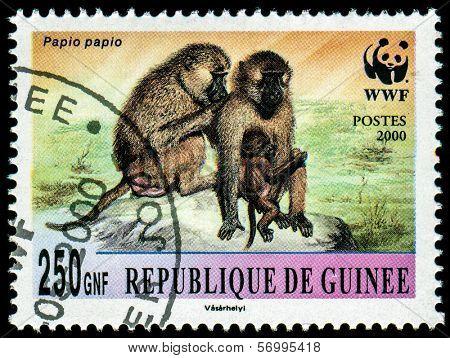 GUINEA - CIRCA 2000: A stamp printed in Guinea shows Papio papio, series, circa 2000