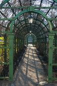picture of pergola  - Green pergola in a park in spring close up - JPG