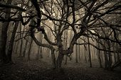 foto of eerie  - Dark eerie spooky tree in a forest with fog on halloween