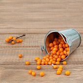 stock photo of sea-buckthorn  - Fresh organic sea - JPG