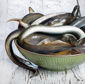 pic of sucker-fish  - lampreys on a wooden table - JPG