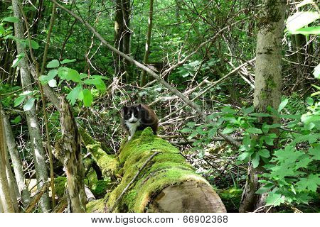 Cat on an old mossy log in the forest