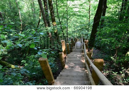 Wooden bridge in the forest. Sigulda.