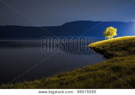 Tree by the lake at night