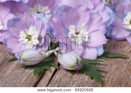 Beautiful Lilac Flowers Delphinium Closeup On A Wooden