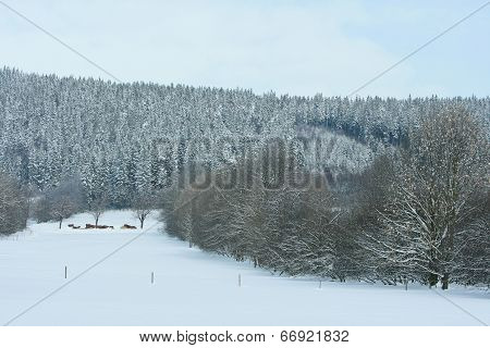 Nice Mountain Forest In Winter