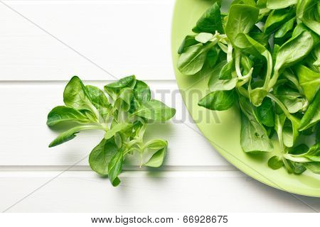 top view of corn salad, lamb's lettuce