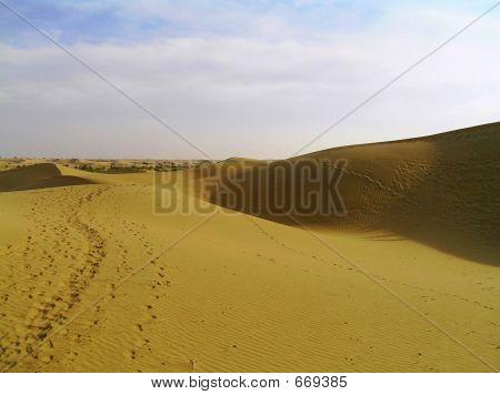 Camel Foot Marks In Desert