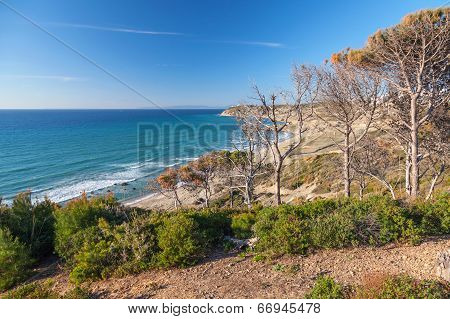 Gibraltar Strait, Morocco. Dry Pine Trees On The Coast