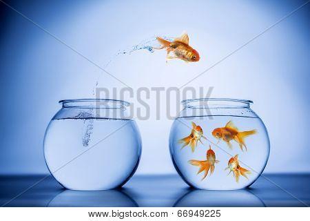 Fish happily jumping