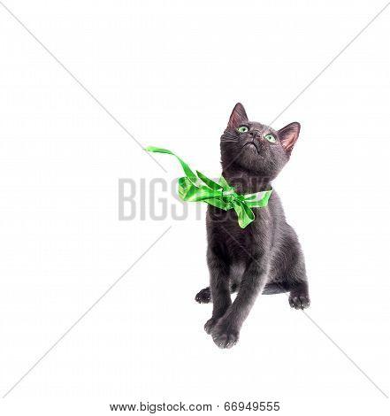 Green Eyed Black Kitten