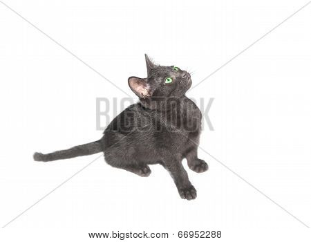 Black Kitten Waiting