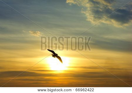 Sunset. Bird Silhouette And Sun