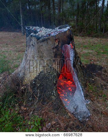 Smoldering Stump