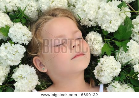 Little girl laying in flowers - snowball