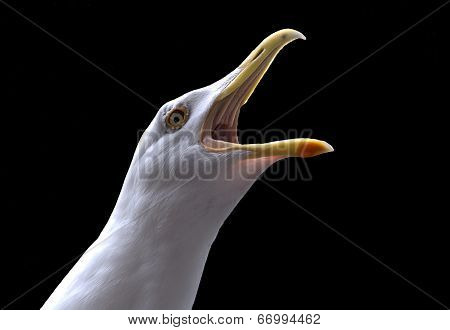Seagull cry