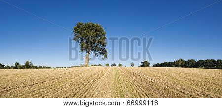 Lone Tree In Dry Landscape.