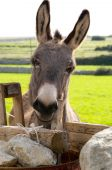 stock photo of soma  - the group of donkeys near the wall - JPG