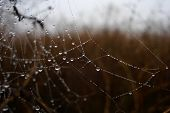pic of cobweb  - Photo cobwebs and water on a cloudy day - JPG