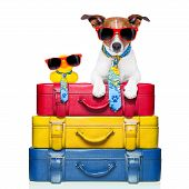 image of carry-on luggage  - dog traveling with yellow plastic duck on top of luggage stack - JPG