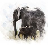 stock photo of tusks  - Watercolor Digital Painting Of Elephants  - JPG
