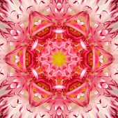 stock photo of kaleidoscope  - Red Mandala Concentric Flower Kaleidoscope Center - JPG