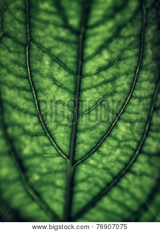Green leaf background, abstract natural backdrop, vintage style photo, beautiful nature detail, grunge floral wallpaper