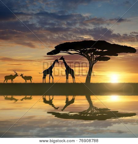 Giraffes with Kudu at sunset