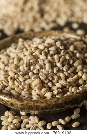 Raw Organic Barley Grain