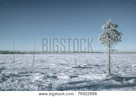 Tree In A Plain