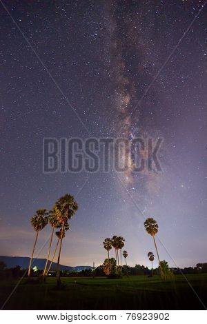 Milky Way And Sugar Plam,long Exposure