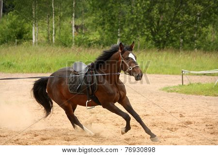 Brown Playful Horse Galloping On The Line
