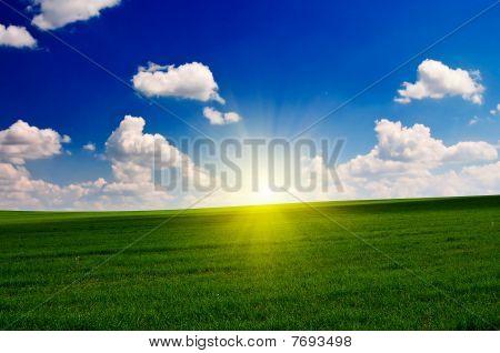 Wonderful Field By Spring.