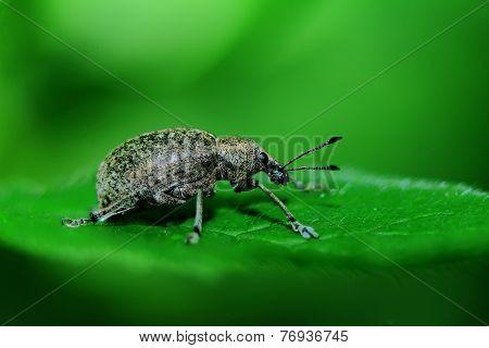 grey bug