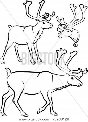 reindeer - vector outlines