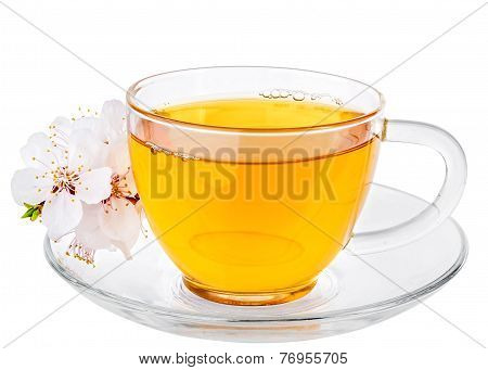 White Cup Of Tea And Apricot Flowers