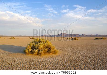 Barren Mojave Desert
