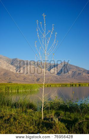 Sapling Grows Beside Lake