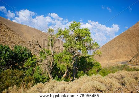 Tree Grows In Death Valley