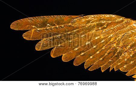 Golden Metal Wing