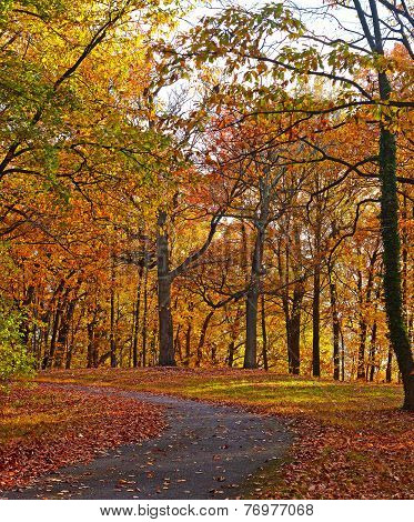 A bike trail along deciduous trees in autumn.