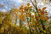 stock photo of temperance  - Temperate forest at fall season - JPG