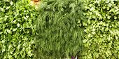 image of greenery  - greenery on market as background - JPG