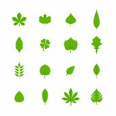 image of linden-tree  - Green trees leaves flat icons set of oak aspen linden maple chestnut clover plants isolated vector illustration - JPG