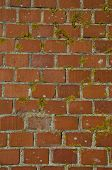 stock photo of lichenes  - old red brick wall with lichens background and texture - JPG
