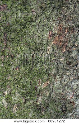 Flat Pine Tree Bark Background