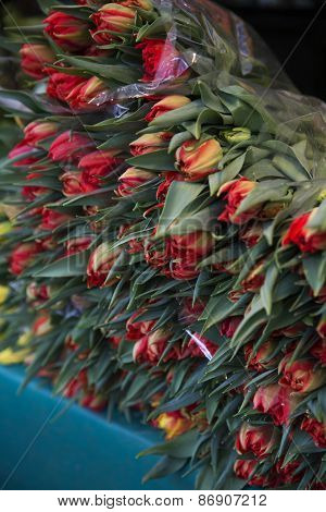 Large Group of Tulips at the Flower Market in Paris