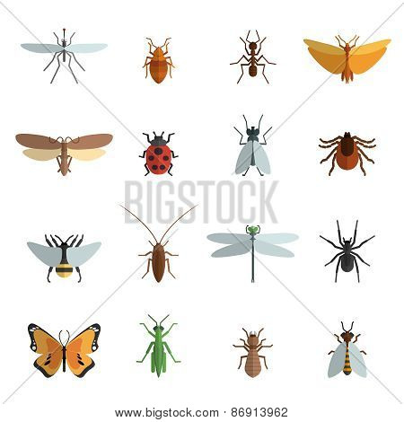 Insect Icon Flat
