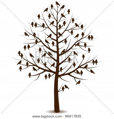 Birds On Branches Of Tree