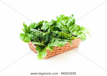 Bunch Of Green Raw Spinach Leaves Close Up Differential Focus